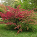 Early autumn colours