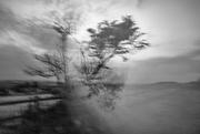 16th Sep 2020 - Tree at Dusk