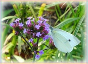 17th Sep 2020 - butterfly