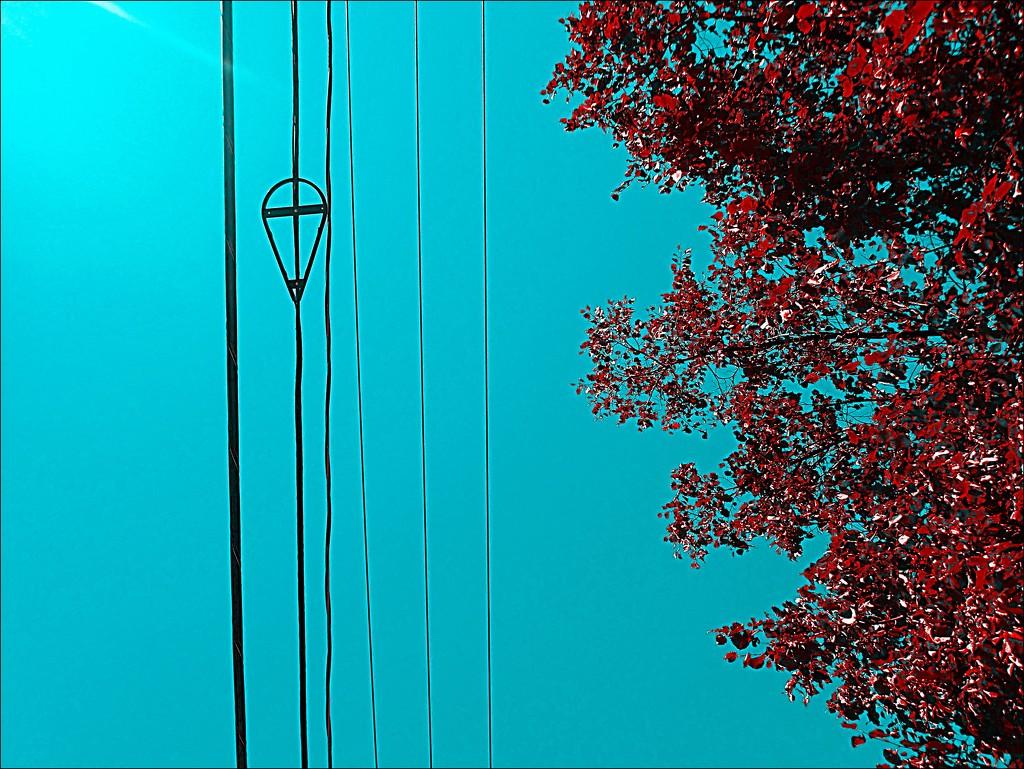 It's Always Best to Look Up by olivetreeann