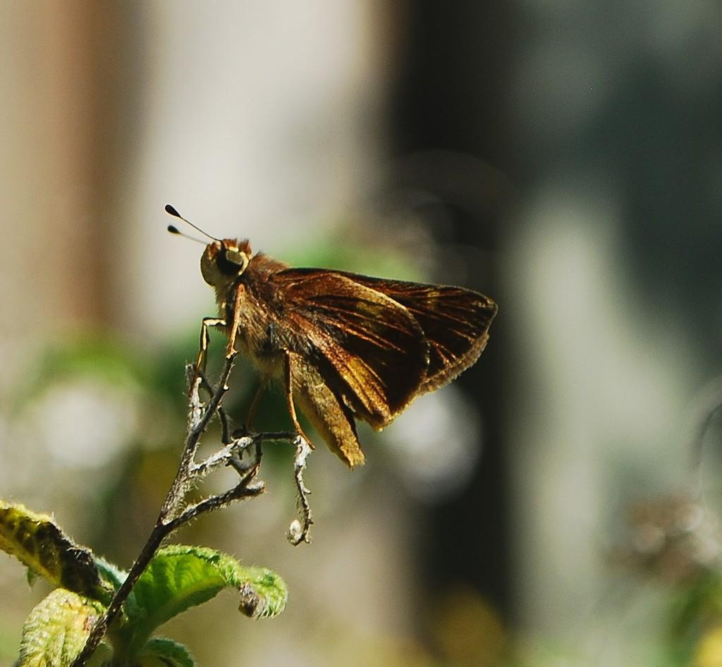Moth by sherimiya