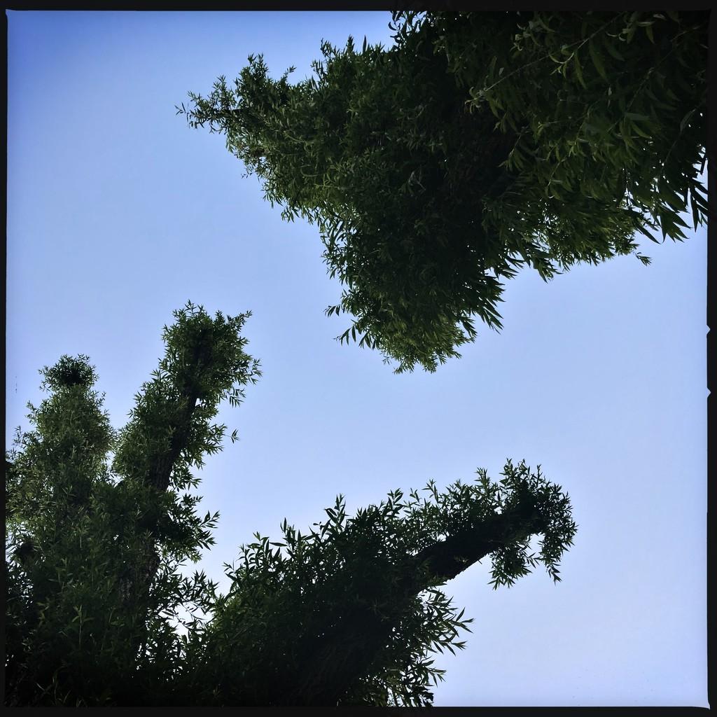 Furry trees by mastermek