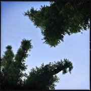 17th Sep 2020 - Furry trees