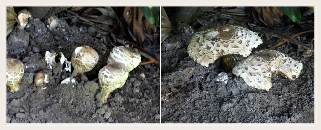 Fungi  by beryl