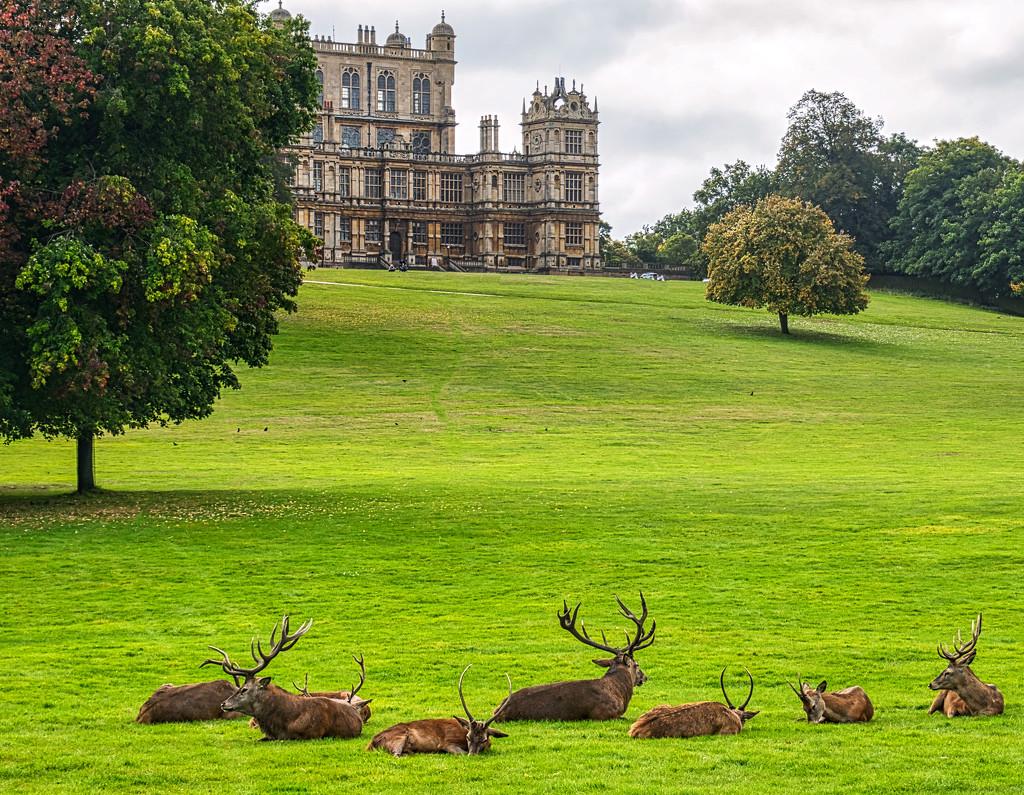 Deer & Hall. by tonygig