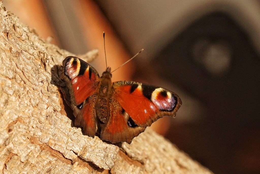 Butterflies are... by romainz