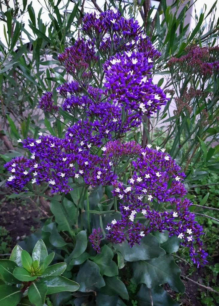 Pop of purple  by salza