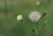 17th Sep 2020 - Tiny flower