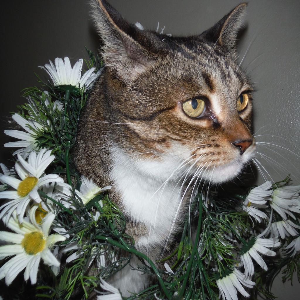 Cat with Flower Garland by spanishliz