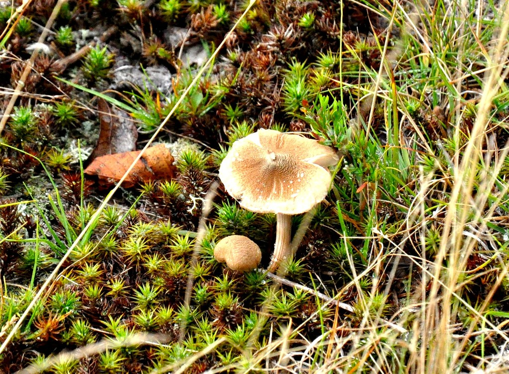 Maine mushrooms by sailingmusic
