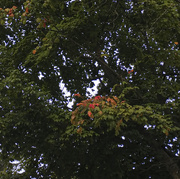 14th Sep 2020 - First touch of color