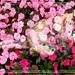 Splotchy in flowers
