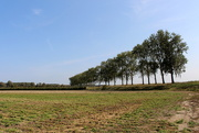 17th Sep 2020 - Line of trees. (1)