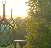 18th Sep 2020 - Glass balls in the sunrise this morning