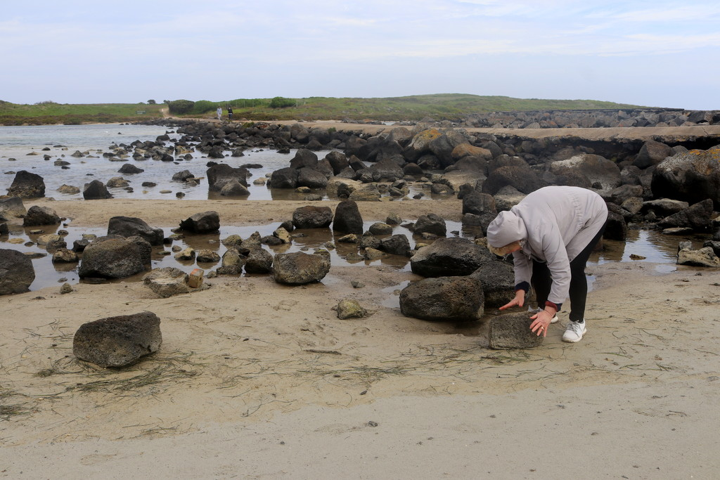Searching for crabs by gilbertwood