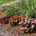 Still blooming