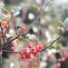 Yeats's Berries