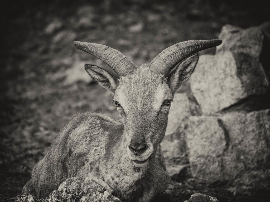 Eye to eye by haskar
