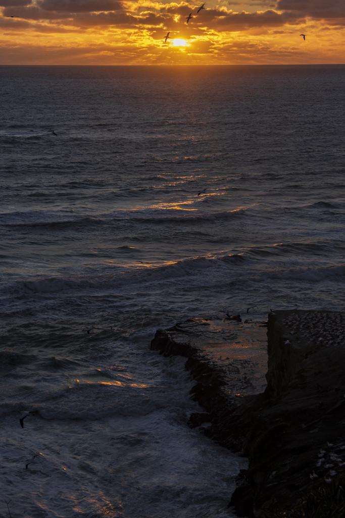 Sunset at Muriwai by nickspicsnz