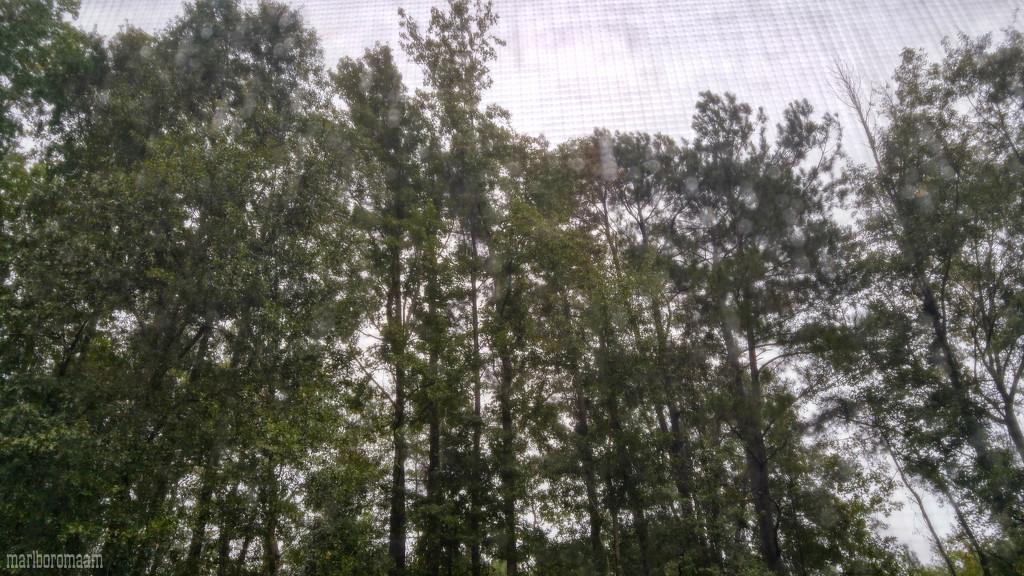 Keeping an eye on the trees... by marlboromaam