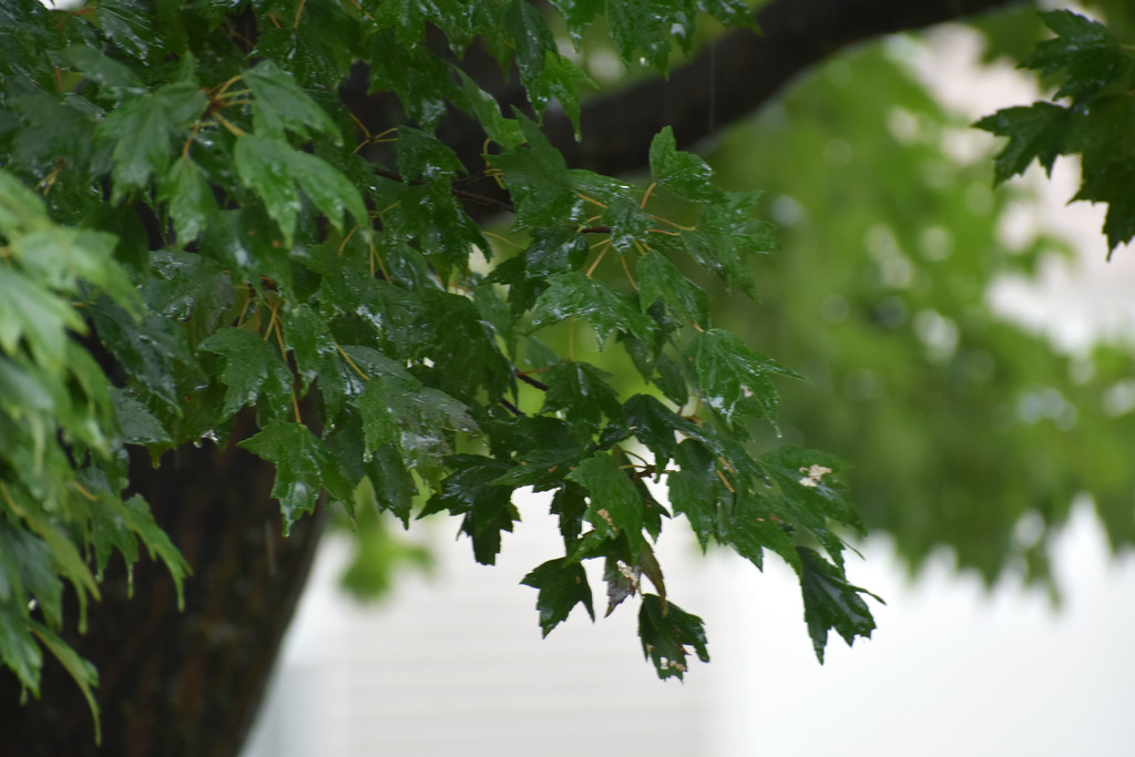 treebokeh by homeschoolmom
