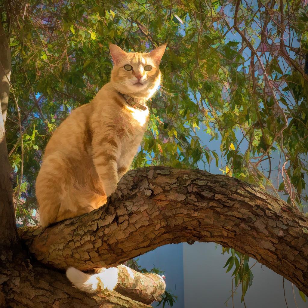 Minky watching the birds by ludwigsdiana