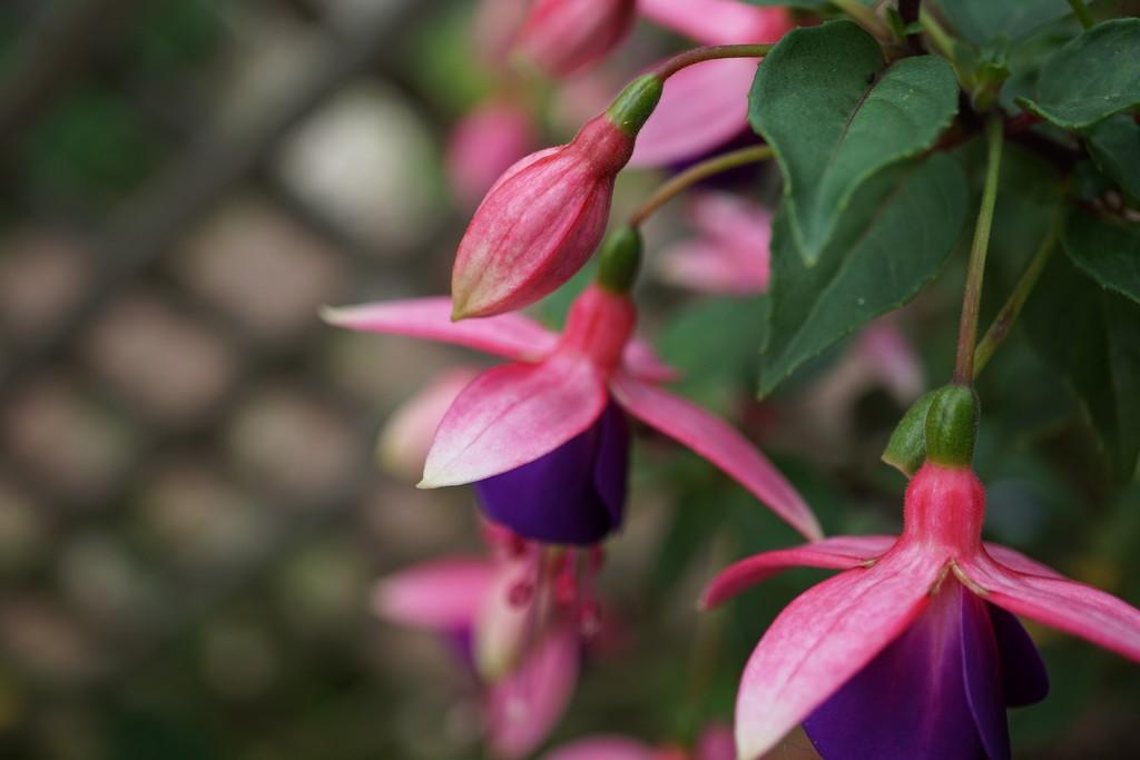 return to the garden: pink and purple by quietpurplehaze