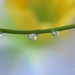 Droplets with fake daffodil