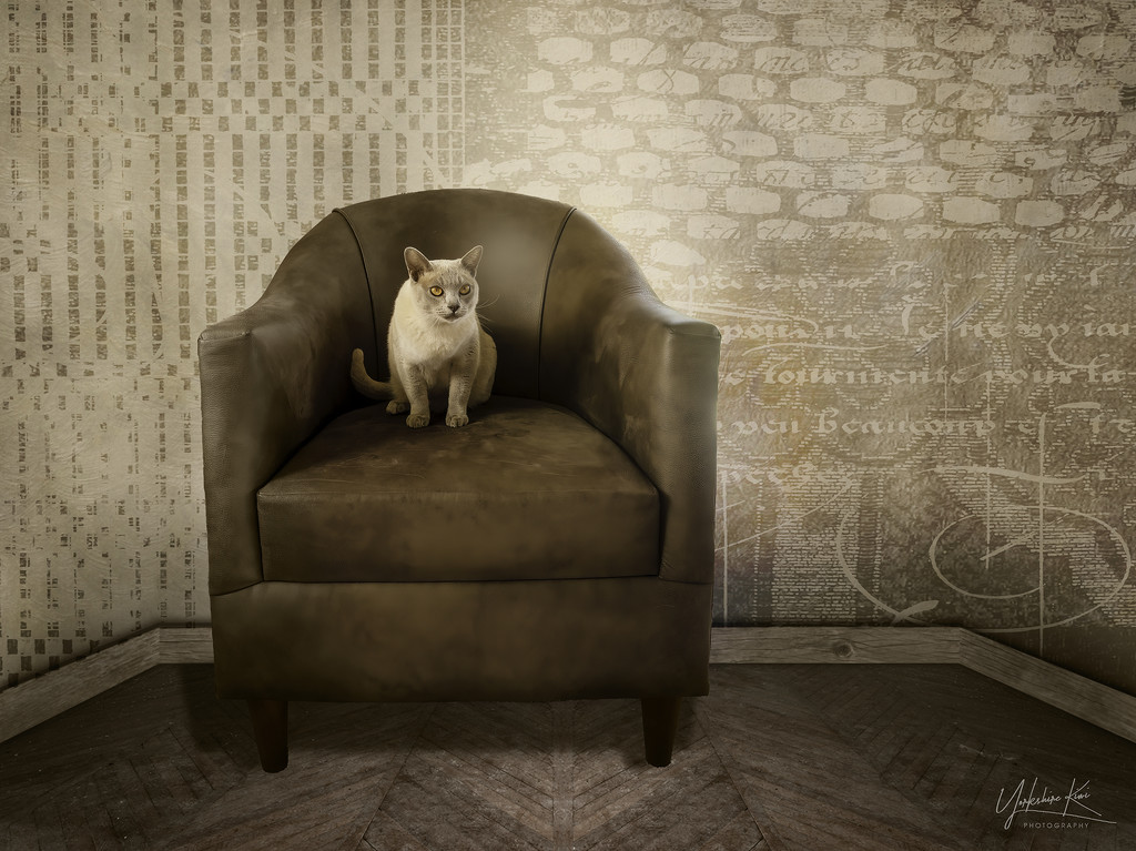 Percy's Chair by yorkshirekiwi