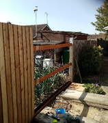 19th Sep 2020 - Fence