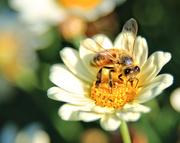17th Sep 2020 - Spring has sprung