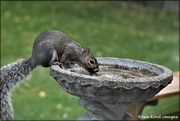 19th Sep 2020 - Even Squizzer gets thirsty