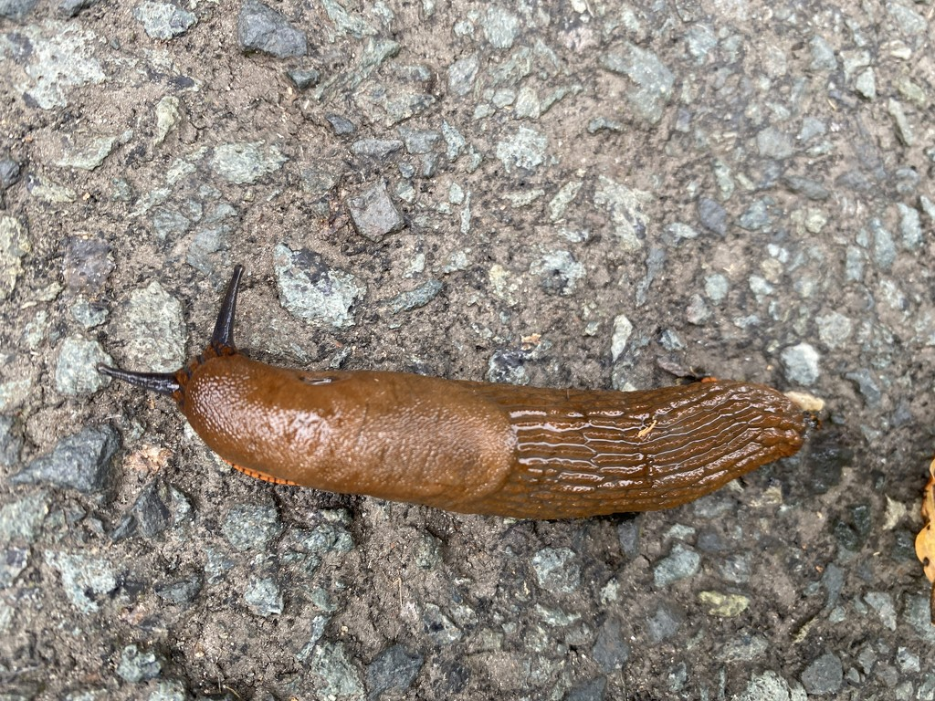 Slug by tinley23
