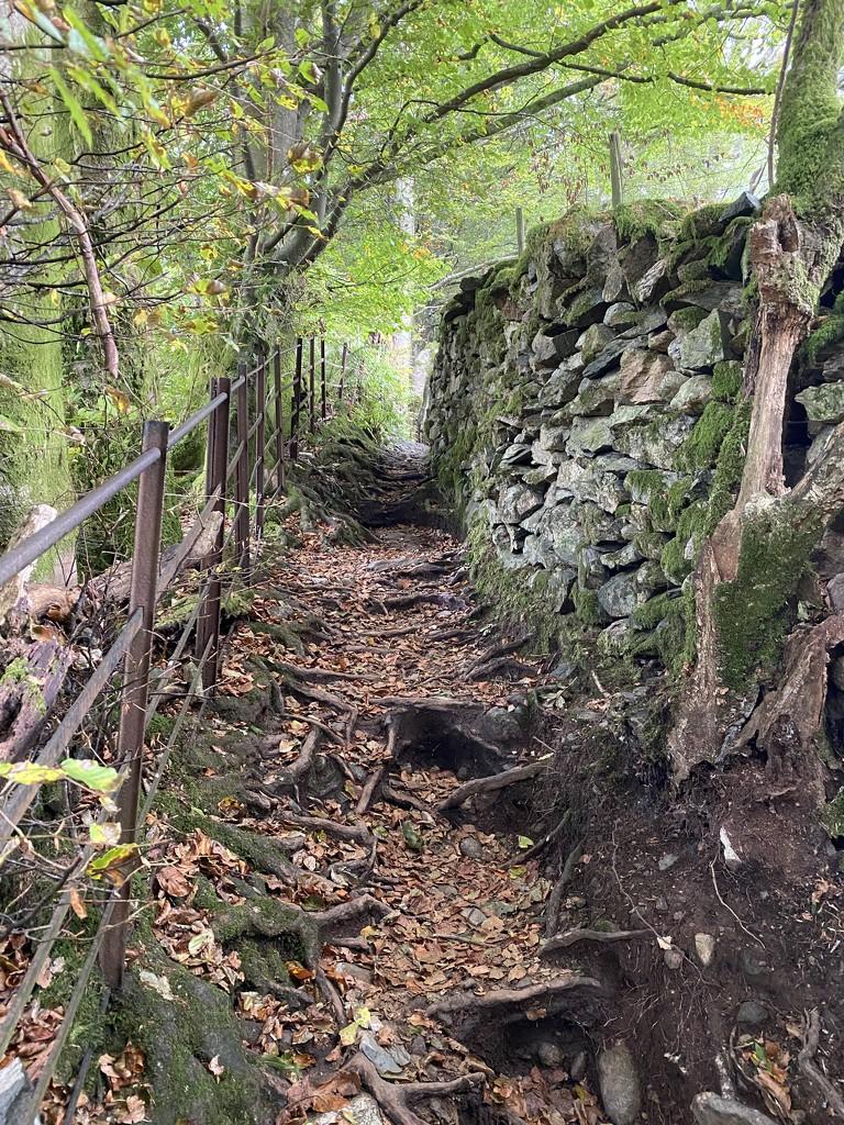 Rough terrain by tinley23