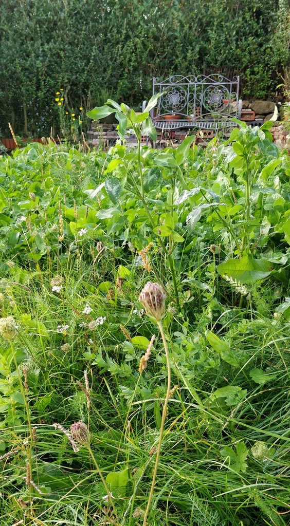 Garden mini meadow by roachling