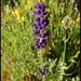 flocked lavender