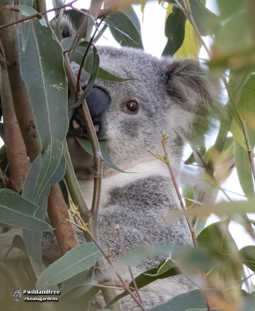 she found me again by koalagardens