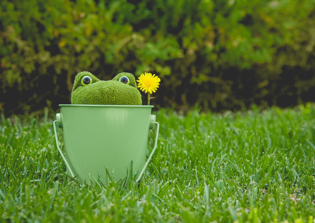 (Day 218) - Frog in a Bucket by cjphoto