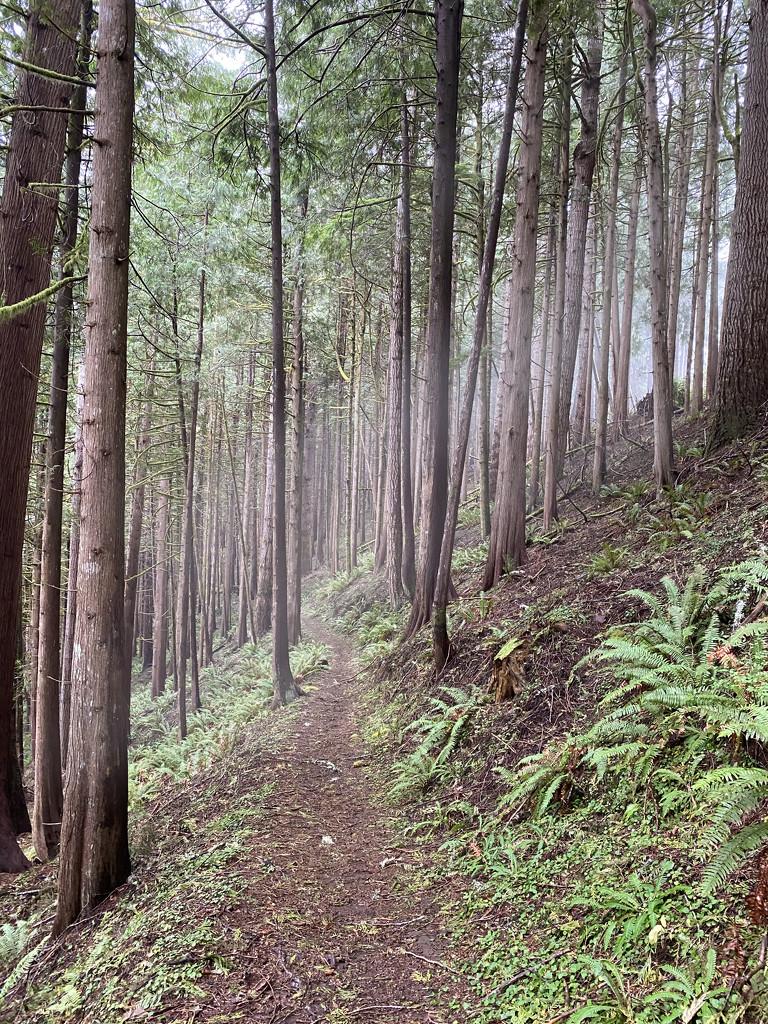 Cedar forest by jgpittenger