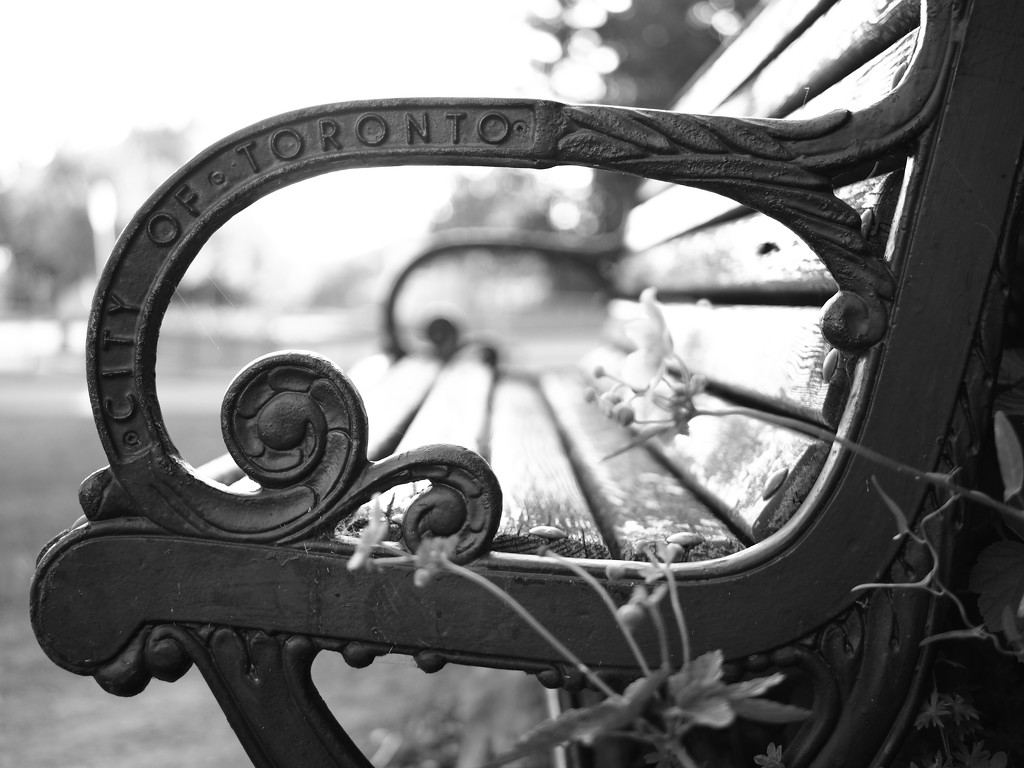 SOOC bench by northy