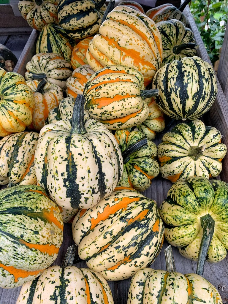 Pumpkins season is starting ! by cocobella