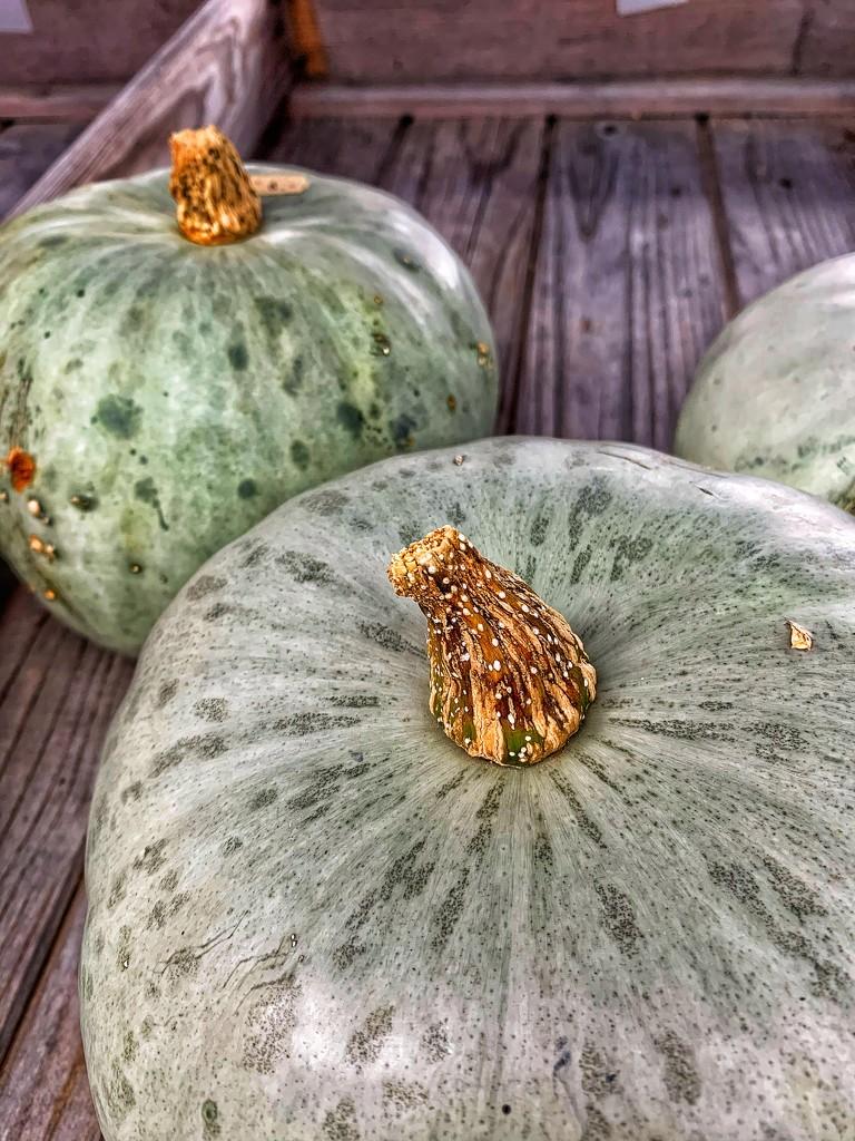 Pumpkins.  by cocobella
