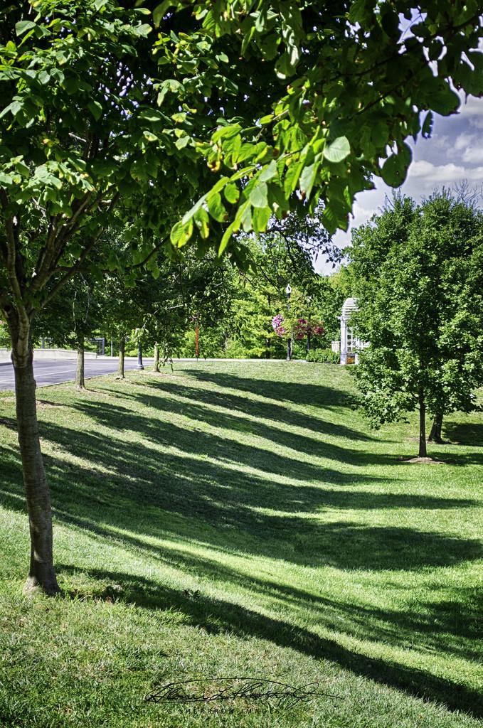 Tree Rep by ggshearron