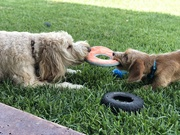 19th Sep 2020 - Play date