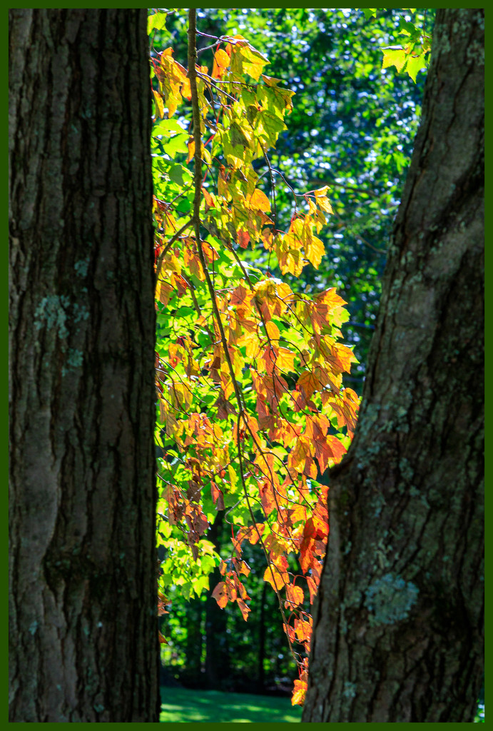 Signs of Autumn by hjbenson
