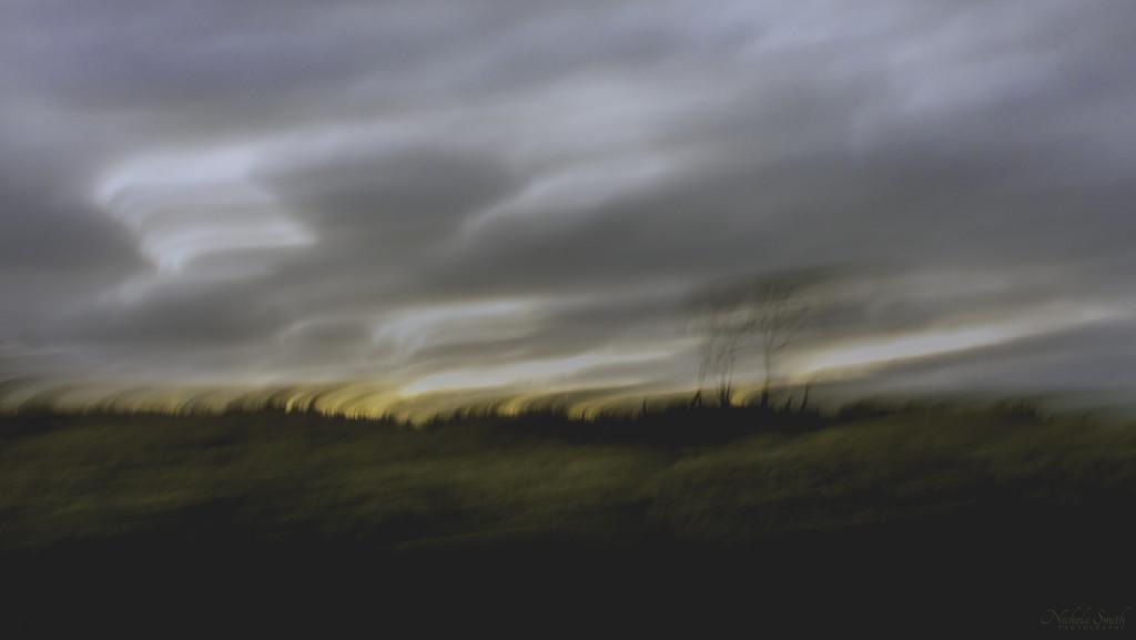 Windswept by nickspicsnz
