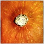 20th Sep 2020 - September fruit