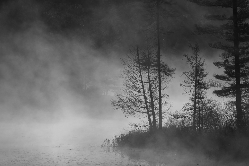 Foggy morning paddle  by radiogirl