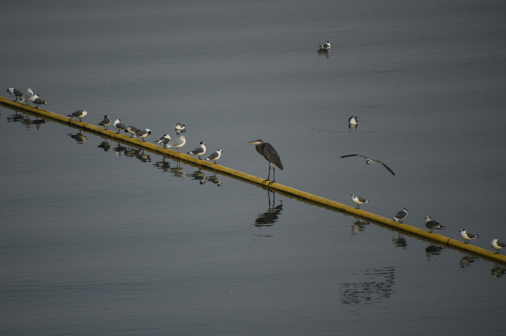 One of These Birds Just Doesn't Belong Here by kareenking
