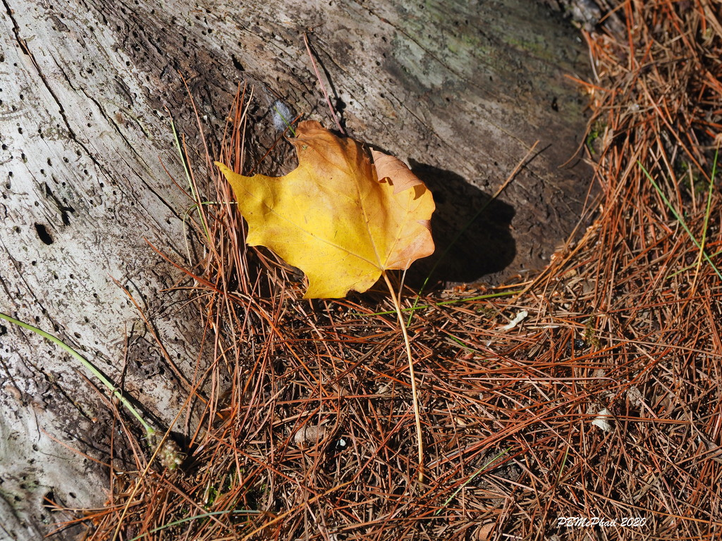 Sign of the Season by selkie